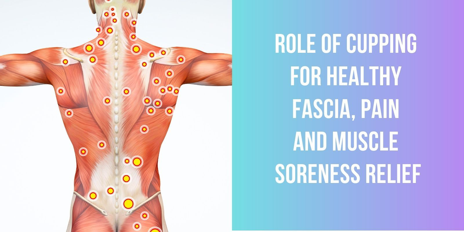 Role of Cupping for Healthy Fascia, Pain and Muscle Soreness Relief - Lure Essentials