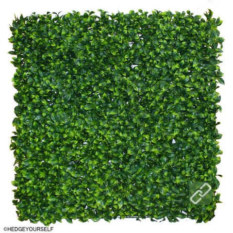 Hedge Panel - Dwarf Lilly Pilly - Artificial Garden Screen