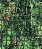 Hedge Panel - Landscape My Life - Hand Crafted Vertical Garden