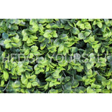 Hedge Panel - Variegated Holly - Artificial Garden Screen