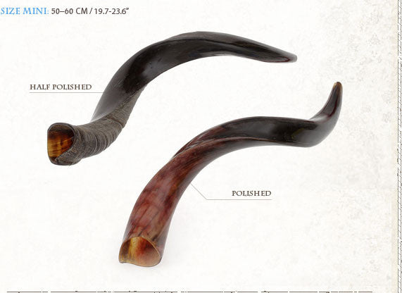 Kosher Yemenite Kudo ,Kudu Horn Shofar By
