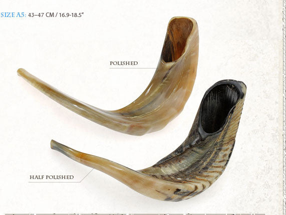 Kosher Rams Horn Shofar By