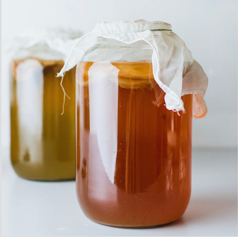two jars of Kombucha with cloth lids