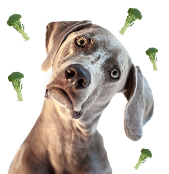 Can Dogs Be Vegan?