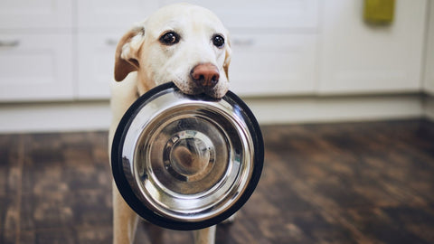 Dog with empty dog bowl in its mouth