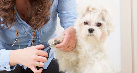 dog getting nail clipped by woman