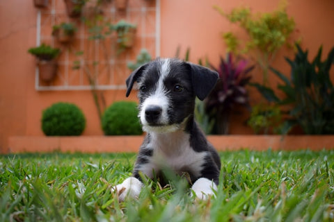 what to consider when feeding small dog breed