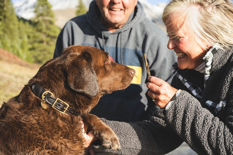 dog-training-and-obedience-chocolate-lab-with-older-couple