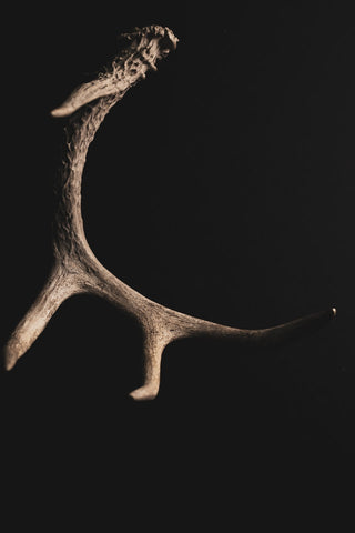 are deer antlers bad for dogs