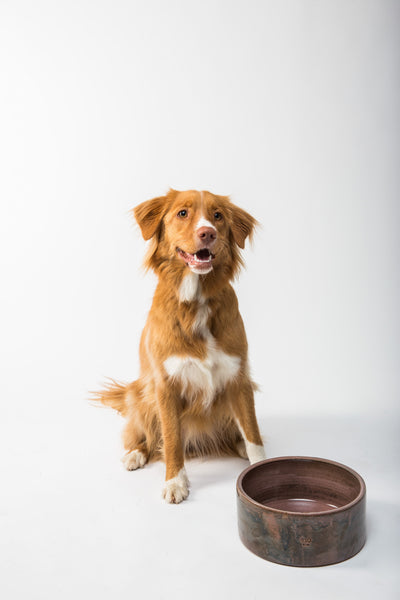Is wet dog food good for dogs-dog with empty bowl