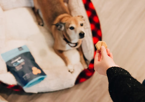 what type of treats do dogs prefer