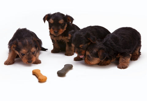 different type of treats with yorkie puppies