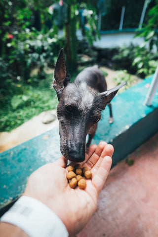 dog won't eat dry food from bowl but will from hand