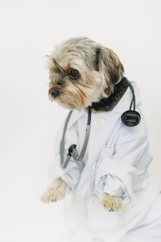 talk to your vet about barf diet for your dog