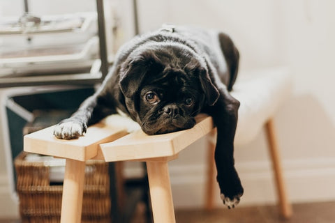 how does boredom affect your dog