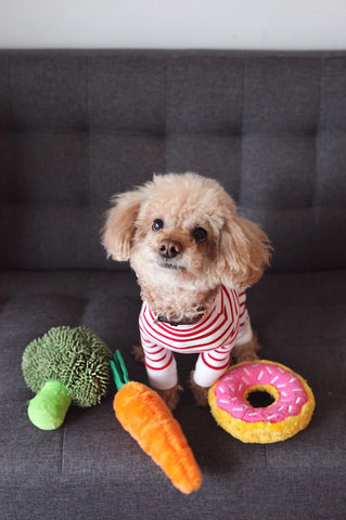 can dogs be vegan dog with toy broccoli carrot and donut