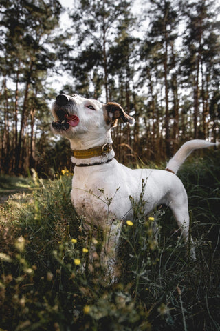 raw food diets are more natural for dogs dog in nature