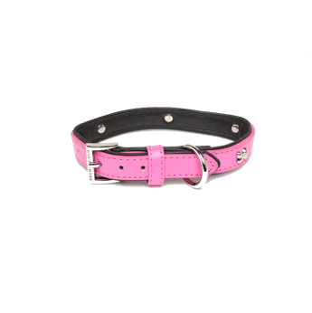Rufus & Coco Bones Collar Medium (39-48cm) - Petzyo