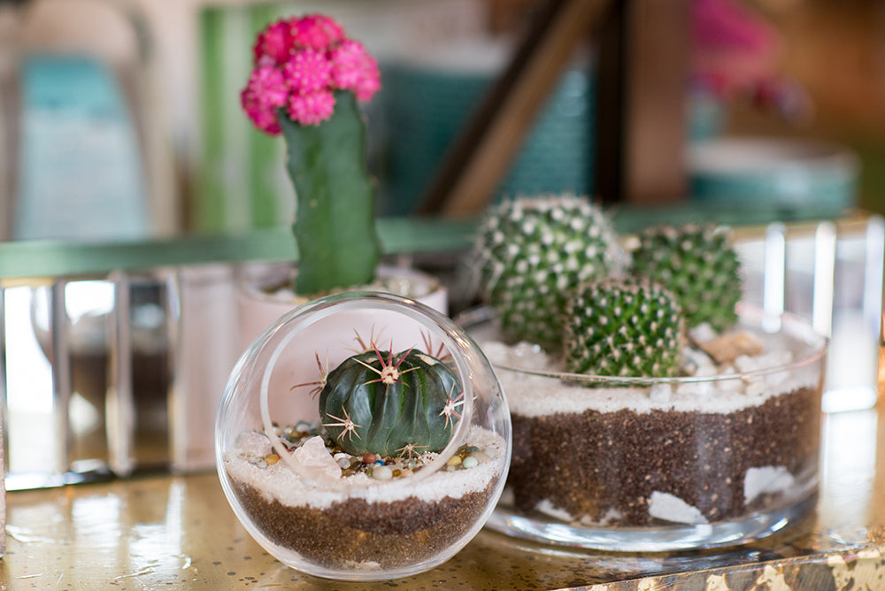 Mothers Day Terrariums