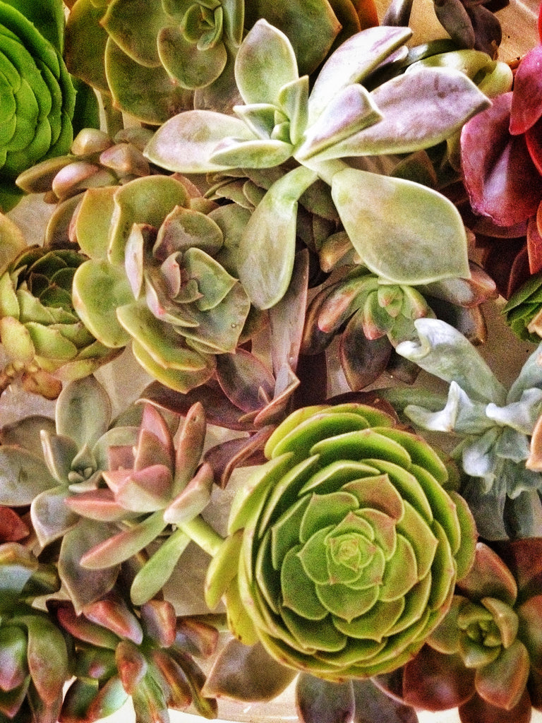 Rochester NY Florist | Favorite Friday | Succulents