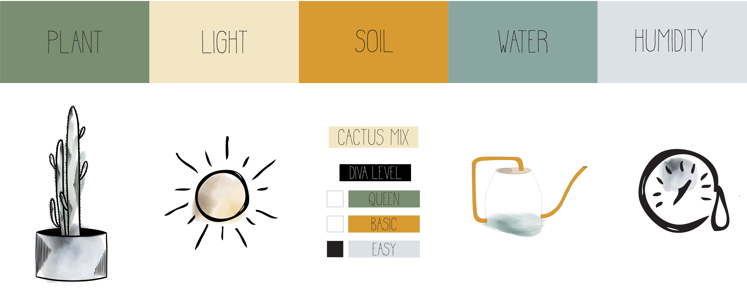 Cactus Care Infographic