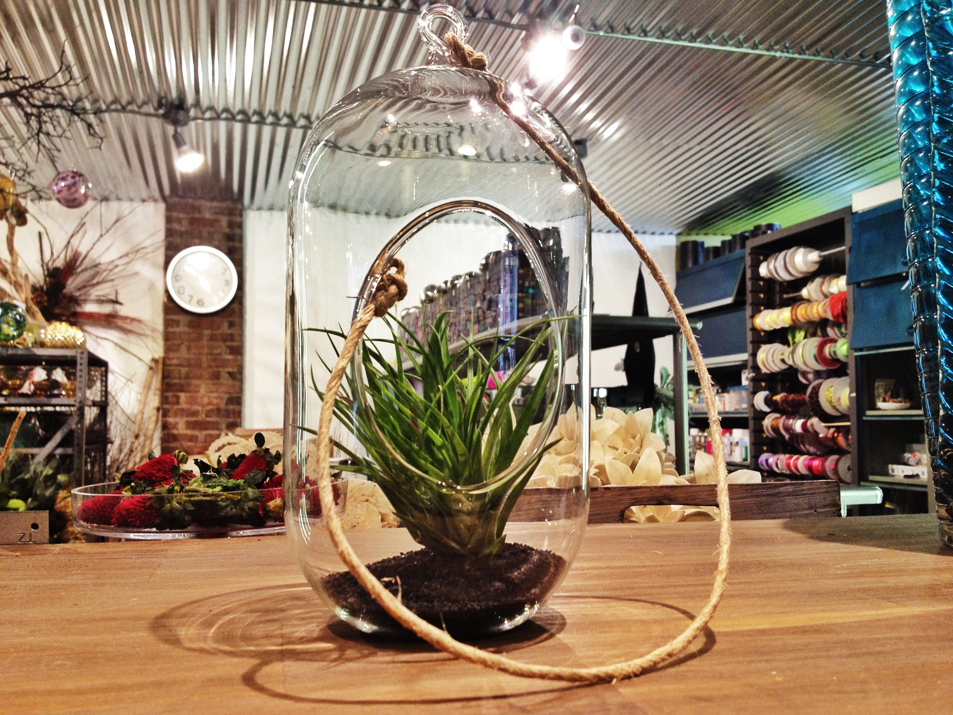 Rochester NY Florist | Father's Day Gift Ideas | Air-plant Globe