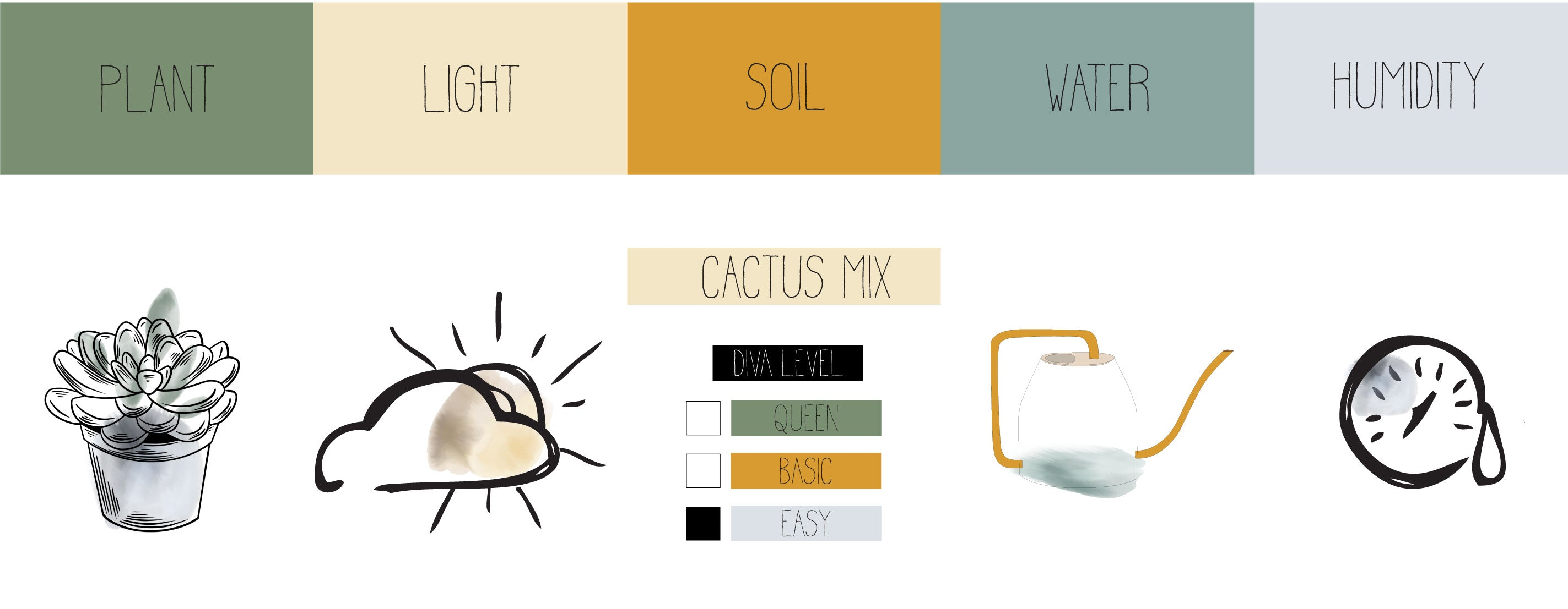 succulent info graphic