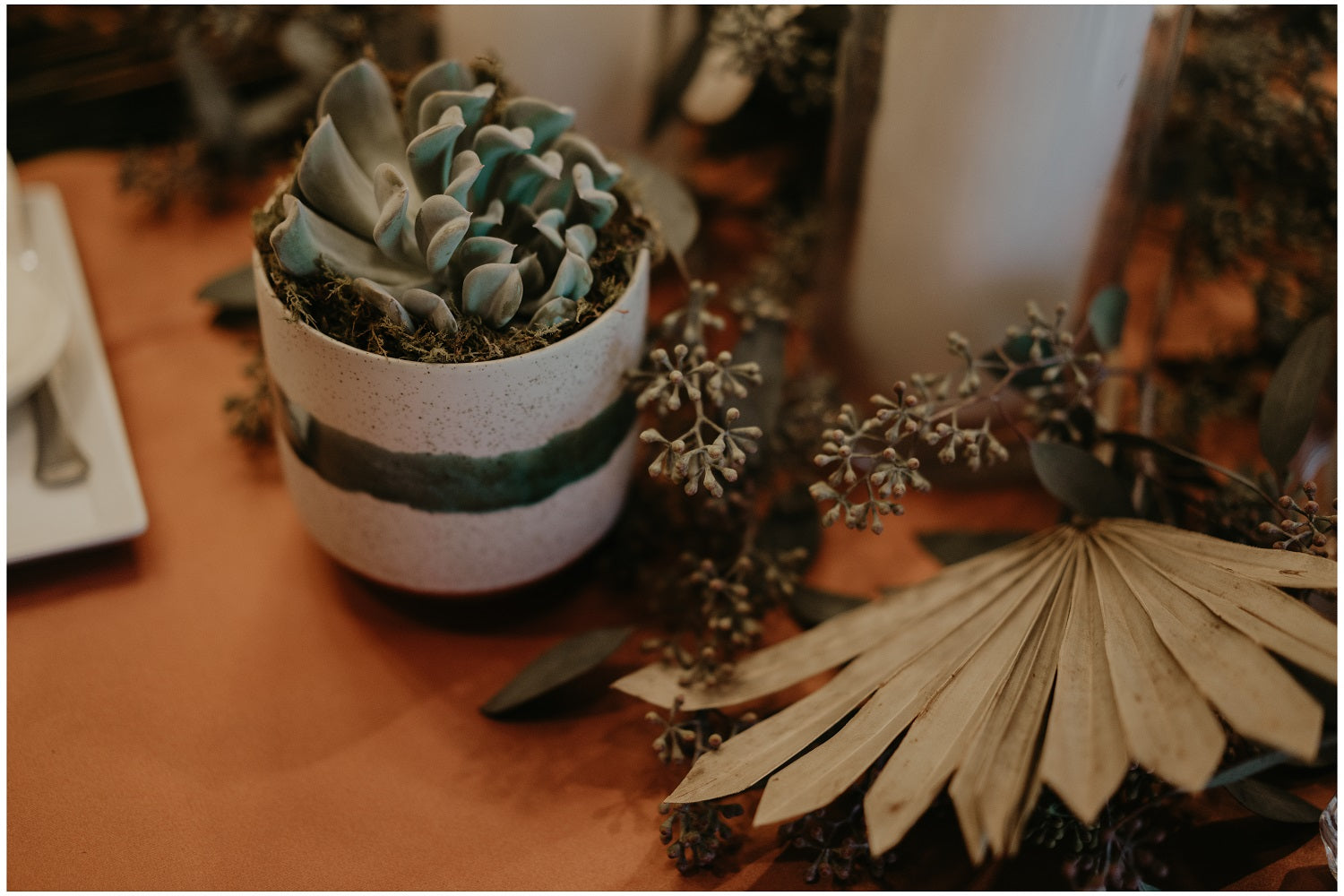 Succulent and dried palm