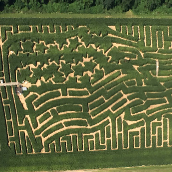 farm_activities_maze_1