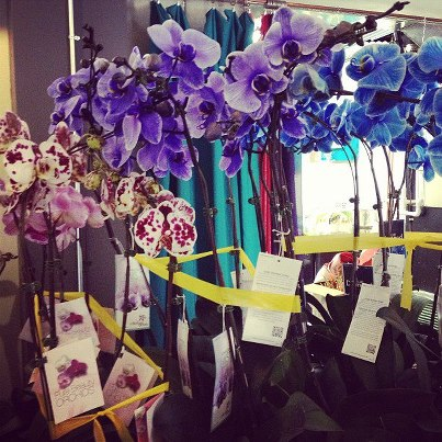 orchids-Rochester-NY-Florists