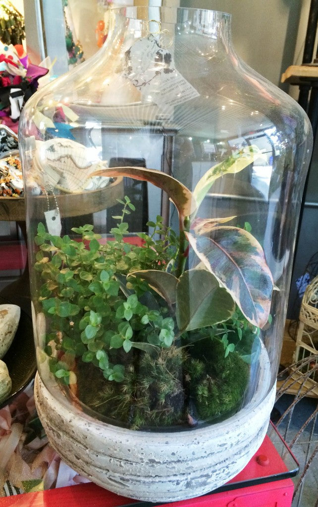 Terrariums at Stacy K Floral