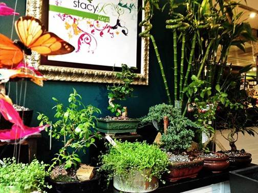 rochester ny florist | fathers day gift ideas | bonsai trees