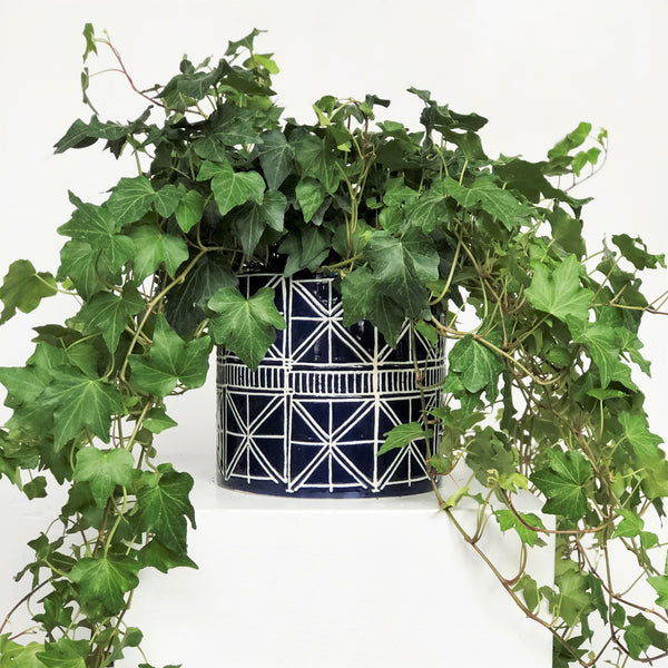 English Ivy Houseplant in Pot - STACY K FLORAL English Ivy is a hardy plant that can thrive in low-light conditions but prefers bright, indirect light. It's important to keep your Ivy houseplant evenly moist but never soggy; misting Ivy with water every week will help maintain a humid environment--especially during the winter months!