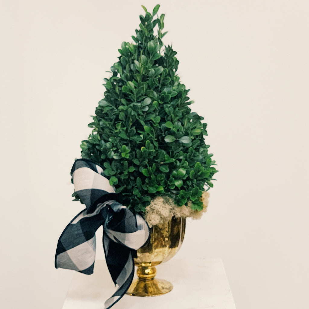 Boxwood tree centerpiece with white background
