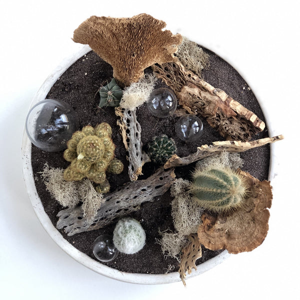 Cactus garden in low container with sand, wood, glass bulbs, Earthy elements