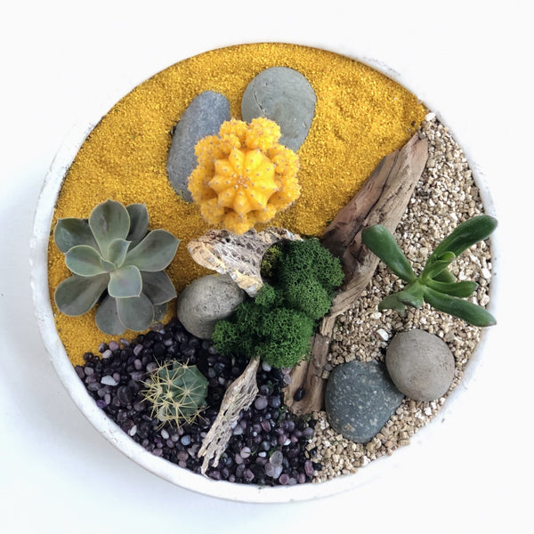 Cactus and succulent garden, with assorted cacti, succulents, sand, stones, and other accents