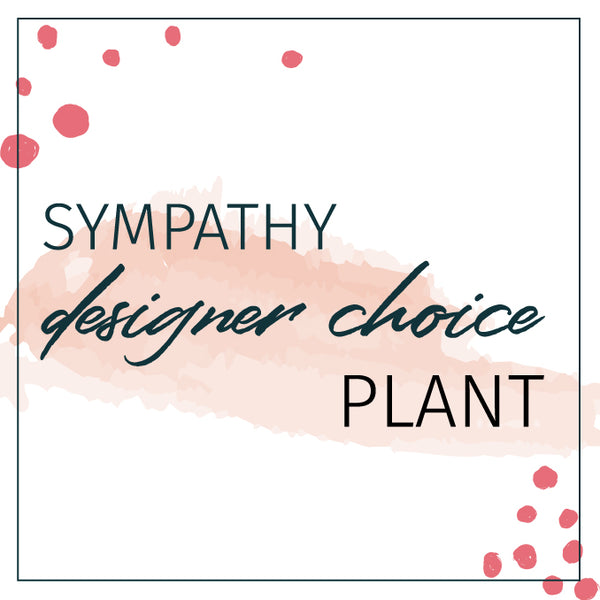 Designer's Choice Sympathy Plant Houseplants - STACY K FLORAL