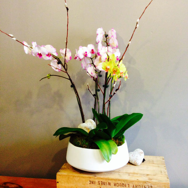 Large Orchid Planter - STACY K FLORAL