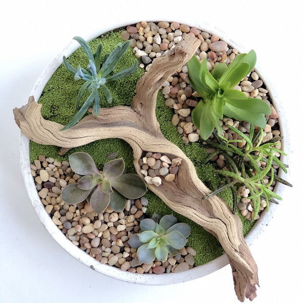 Succulent garden containing an assortment of succulents, includes pebbles, wood, and sand