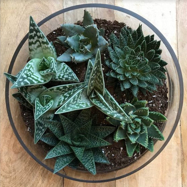 Assorted Succulent Garden - STACY K FLORAL-houseplant