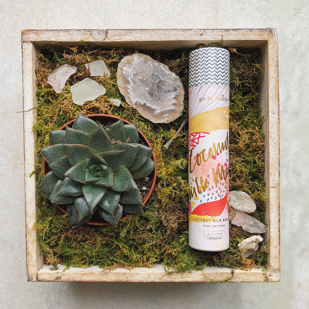 Mother's Day Succulent Gift Box - STACY K FLORAL