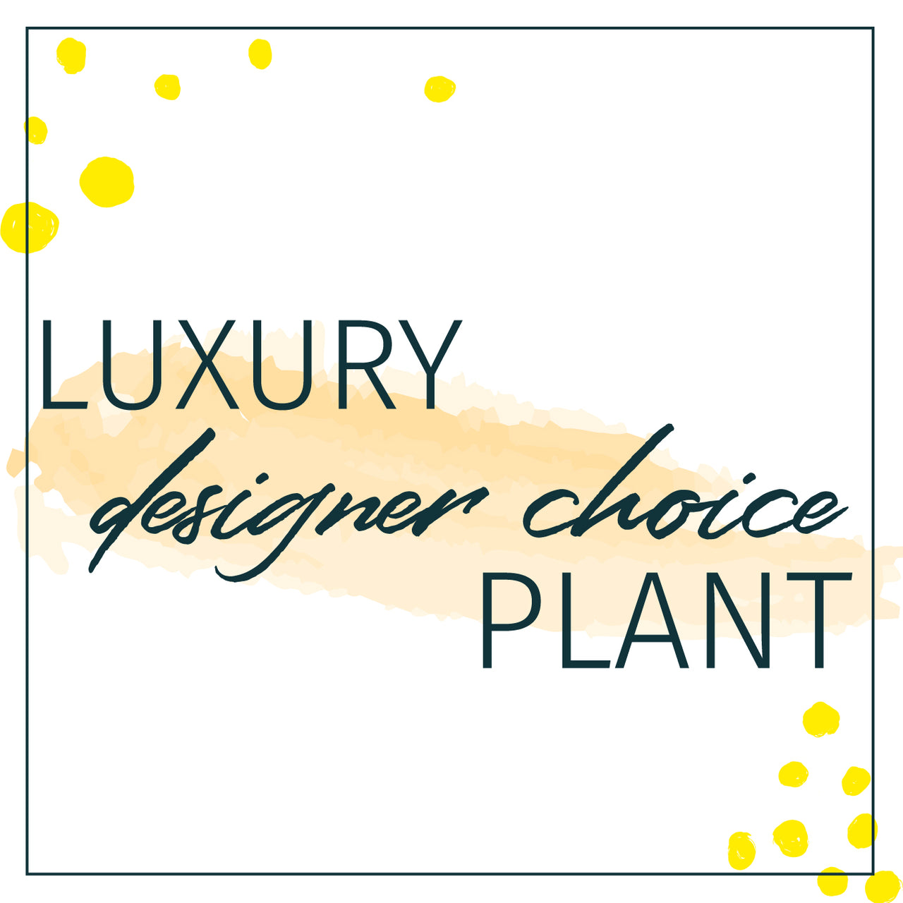 designers choice luxury plant delivery