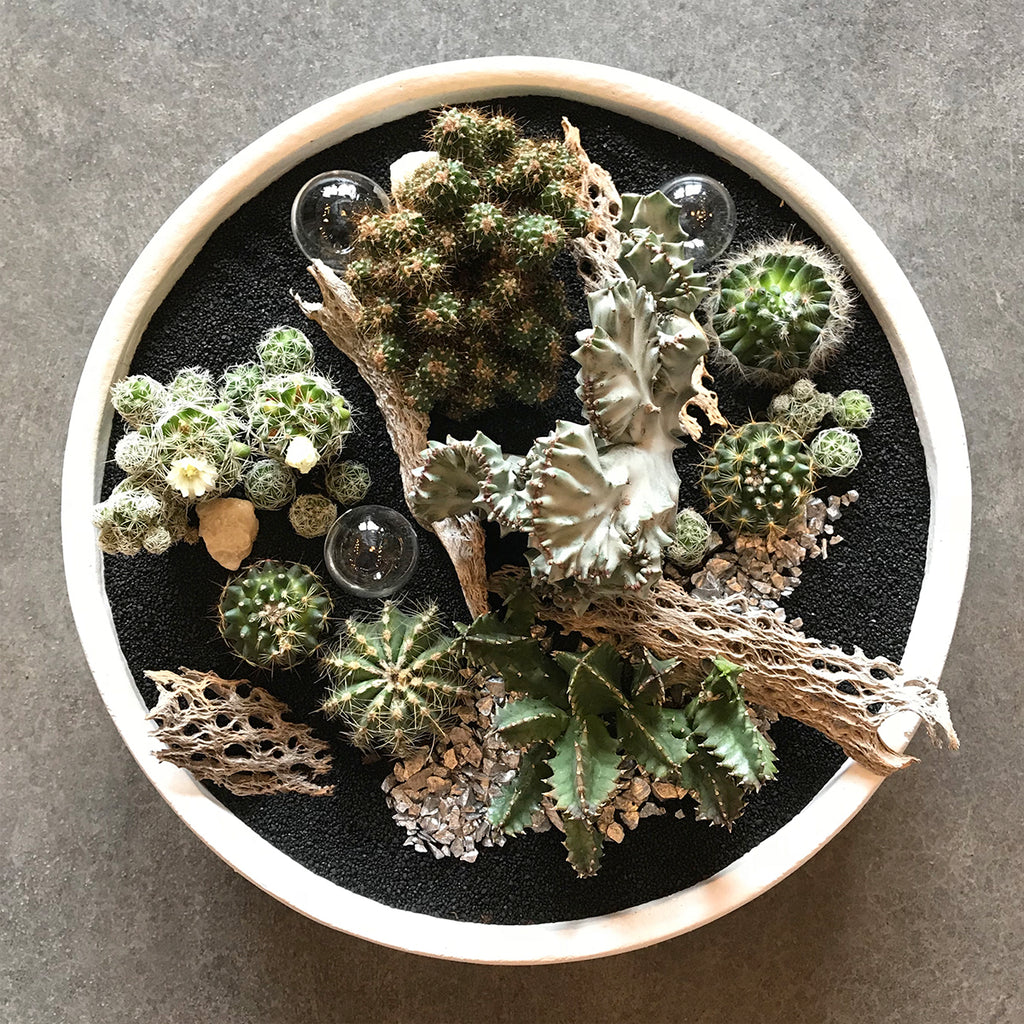 Deluxe Succulent and Cactus Garden - STACY K FLORAL