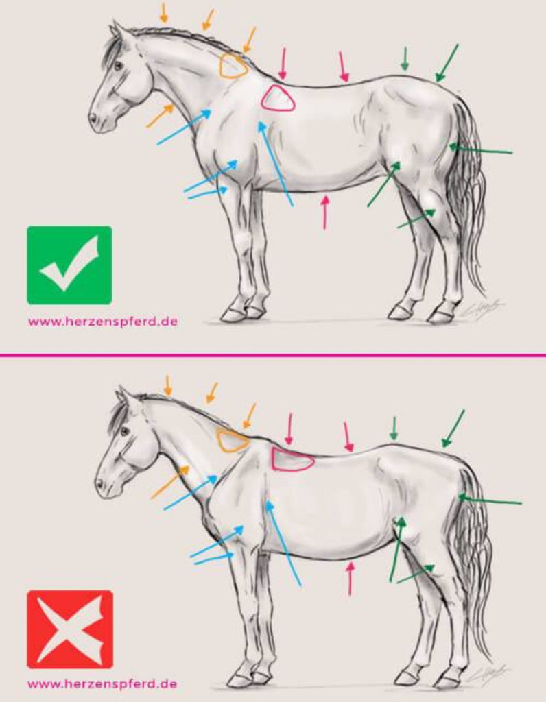 Getting your Horse's Back in to the best shape possible