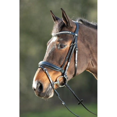 The HFI Shiny Bridle Product Review – Traditional Meets Modern