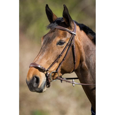 HFI BRIDLE GERMAN - Cob / Brown - Cob / Black - Full / Brown - Full / Black