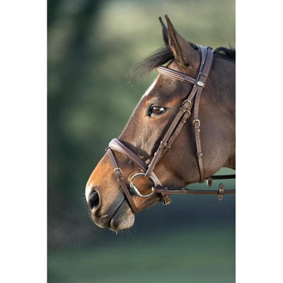 HFI TECHNICAL BRIDLE - PONY / BROWN - PONY / BLACK - COB / BROWN - COB / BLACK - FULL / BROWN - FULL / BLACK horse fitform international