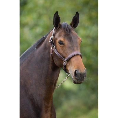 HFI FLAT HALTER - Pony / Black - Pony / Brown - Full / Black - Full / Brown - Cob / Black - Cob / Brown