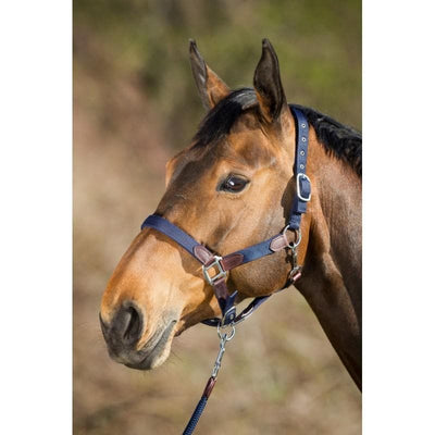 HFI SMART HALTER - Pony - Cob - Full horse fitform international