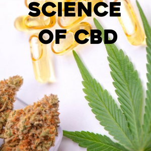 Do you want to be a CBD expert? We've got you covered.